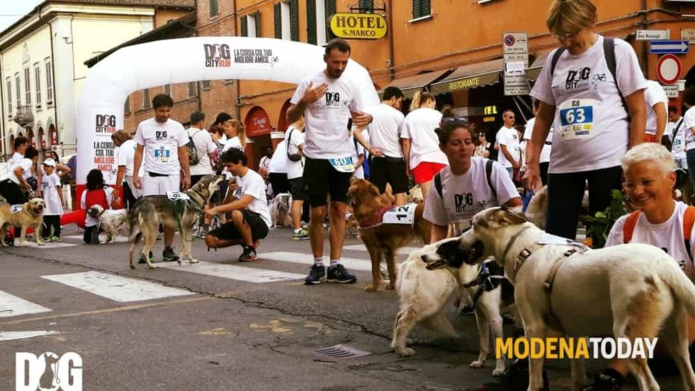 dog city run-3