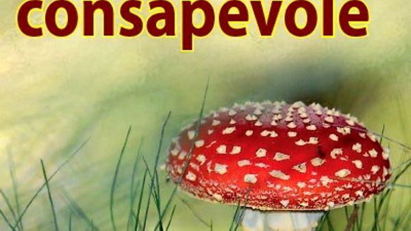 Conoscere i funghi, un ciclo di incontri alla Polisportiva San Faustino