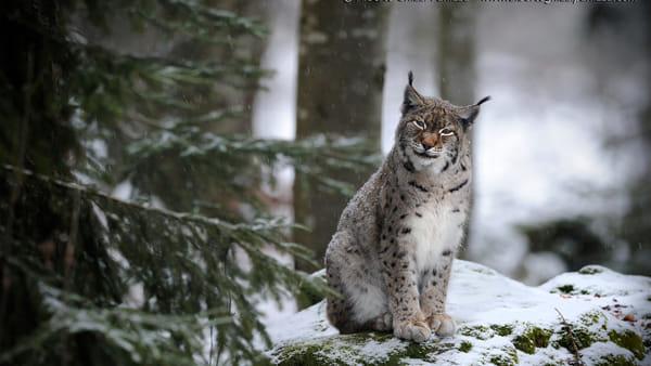 La natura e gli animali nelle foto di Ghizzi Panizza a Maranello