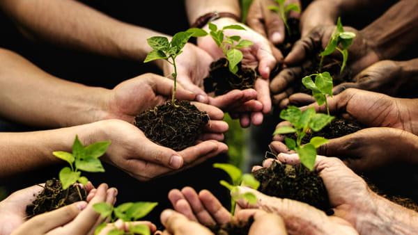 Agricoltura e ambiente, alla fattoria didattica Accanto riprendono le Giornate dell'Economia Solidale