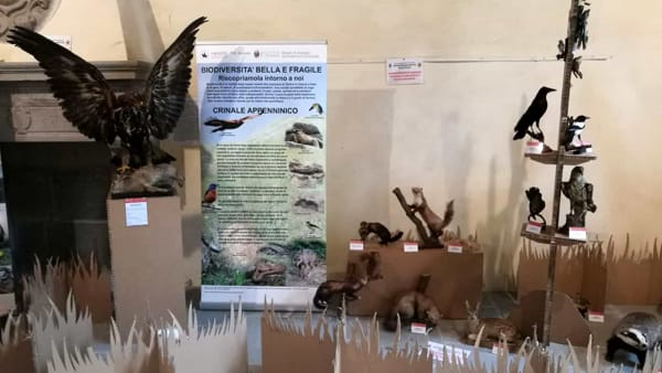 Nella Rocca di Sestola riapre la mostra Unimore sulla biodiversità in Appennino