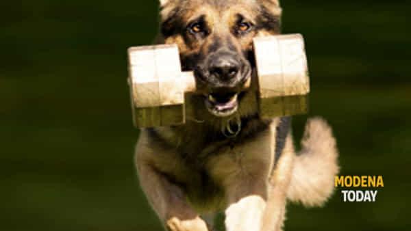 cani: appuntamento a campogalliano per formare la squadra dei campioni-3