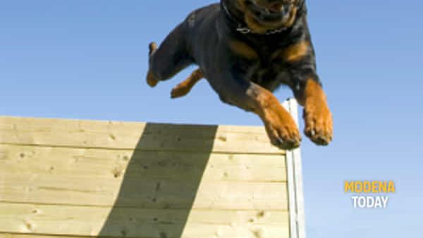 cani: appuntamento a campogalliano per formare la squadra dei campioni-4