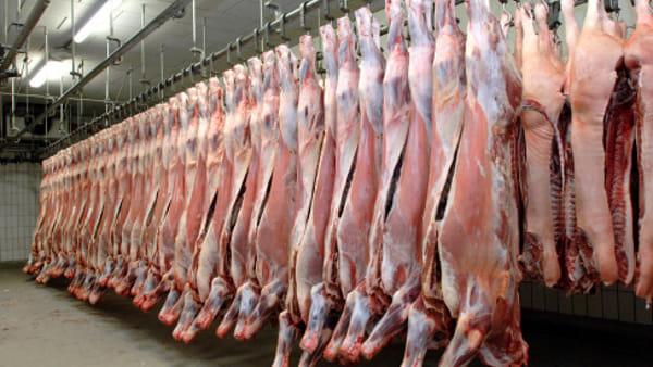 UniMoRe. Incontro sugli appalti della macellazione e lavorazione della carne