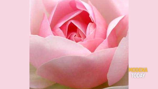 Nel giardino di Rose seguendo le magiche note di Faber