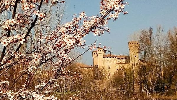 Ciliegi in Fiore, Vignola fa festa con sfilate di carri fioriti e mercatini