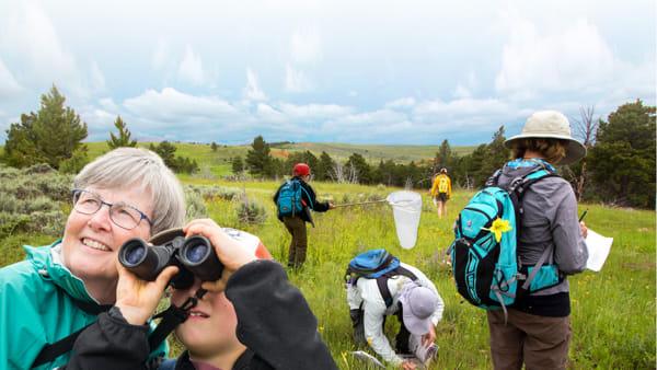 """Gara a chi identifica più insetti, al Parco della Resistenza arriva il """"Bioblitz"""""""