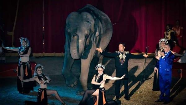 Maya Orfei Circo Madagascar, tre giorni di spettacoli aggiuntivi a Vignola