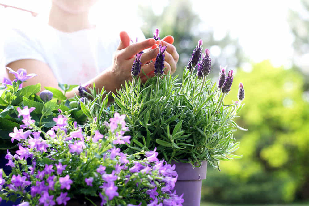 Aromaterapia: 10 piante aromatiche e fiori profumati per